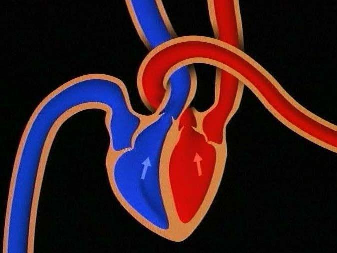 Filmpje over de werking van het hart