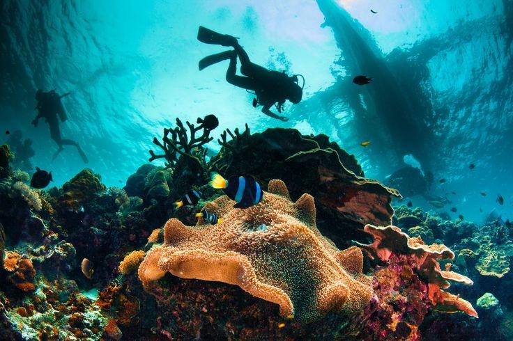Испания едва ли приходит первой на ум при упоминании десятки популярных мест для погружений. Но если вы захотите разнообразить свой отдых в этой стране, то дайвинг станет отличным вариантом: рифы, кораллы, интересные подводные обитатели и даже затонувшие корабли – время, проведенное вод водой, не пройдет зря.