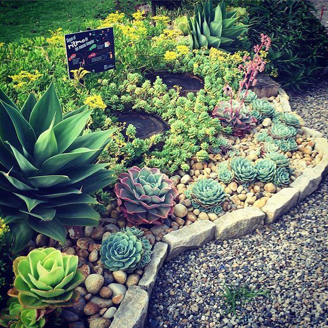 #crasasysuculentas #jardin #crasas #terrasai #paisajismo