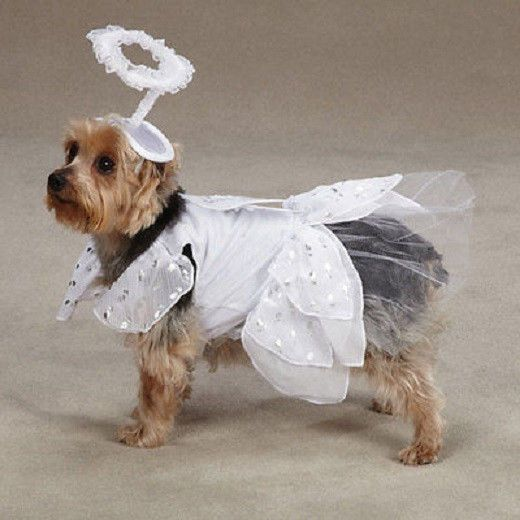Casual Canine ANGEL PAWS Dog Pet Halloween Costume CLEARANCE! #CasualCanine