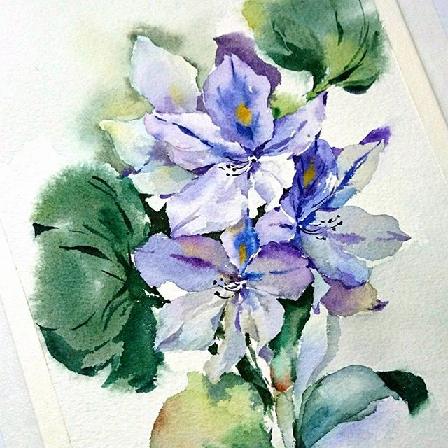 I made a tutorial of this water hyacinth on my youtube channel, in collaboration with the BERN Convention, watch it here: https://youtu.be/q0_ilG2fmeA #watercolor #waterhyacinth #flowers #painting #bernconvention #invasivespecies #europ #art #aquarelle #peinture #jacinthedeau