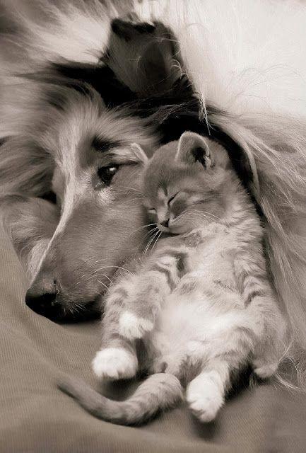 ~whiskers on kittens~