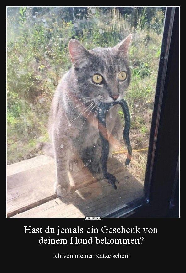 Most Recent Snap Shots Cats And Kittens Care Strategies Katzen Katzen Witze Lustige Katzen