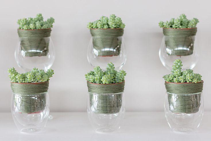 10 besten pflanzenwelt bilder auf pinterest sukkulenten deko und pflege. Black Bedroom Furniture Sets. Home Design Ideas