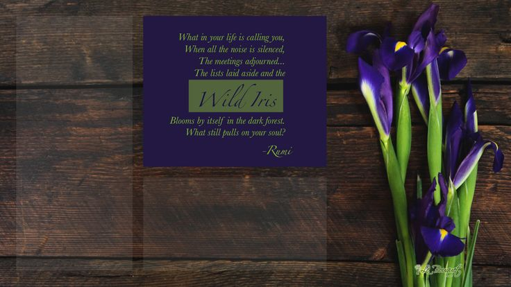 Free wild iris organized digital wallpaper with Rumi quote by Le Bouquet St. Laurent, Inc.
