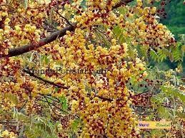 resultado de imagen para plantas enredaderas con flores amarillas