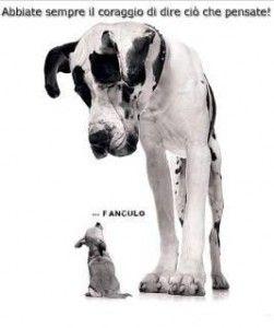 cane piccolo manda fanculo a grande