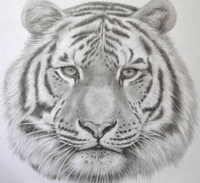 75 Trendy Bow Tattoo Designs Tattoo Ideas In 2021 Tiger Drawing Tiger Face Drawing Realistic Animal Drawings