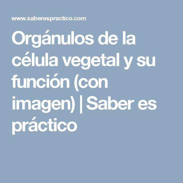 Orgánulos de la célula vegetal y su función (con imagen) | Saber es práctico