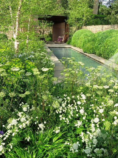 Lovely Garden by Tom Stuart-Smith - Pond birch trees, cow parsley and box