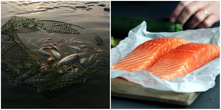 Na Slovensku jeme nezdravé lososy plné antibiotík a kvalitu rýb neriešime. Prečo?