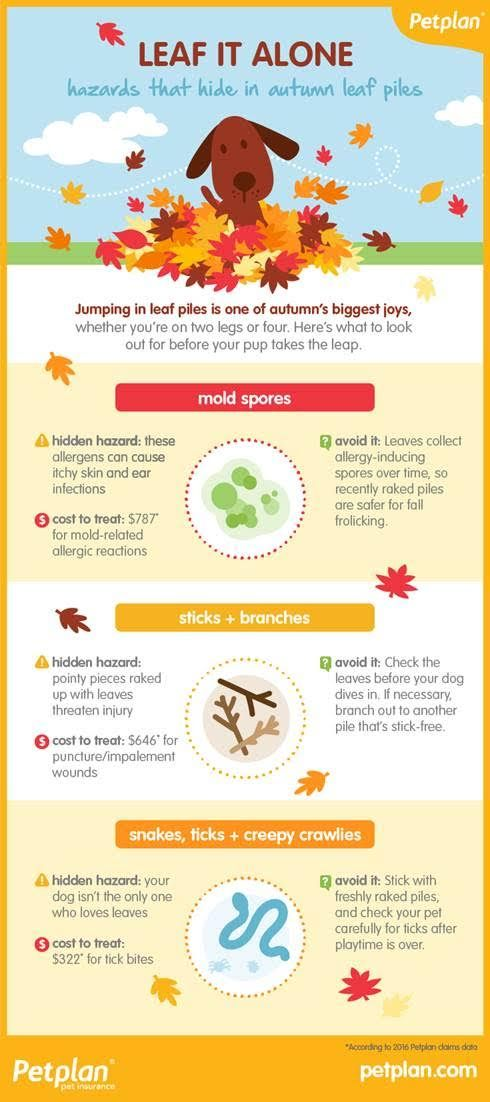 Barking From The Bayou Healthy Pets New Tricks Pets