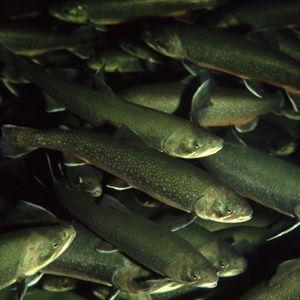 nunavut char fishing