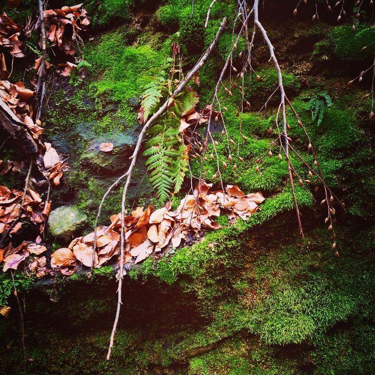 #stillinlove with #nature ❤️☺️ #naturetrip #naturerulez #naturelovers #hike #hiking #hikingadventures #trip #leaf #leaves #moss #mossy #mossyforest #ramszakadek #hungary #forest #hashimoto #hashimotolife #hashimotosdisease