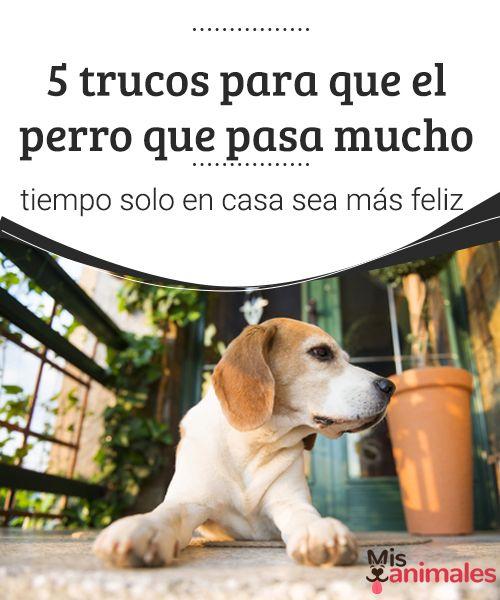 5 trucos para que el perro que pasa mucho tiempo solo en casa sea más feliz  Si tu perro pasa mucho tiempo solo en casa, aquí te dejamos algunos trucos para que tu mascota se adapte a tu ausencia. ¿Vamos a conocerlos? #trucos #feliz #encasa #consejos