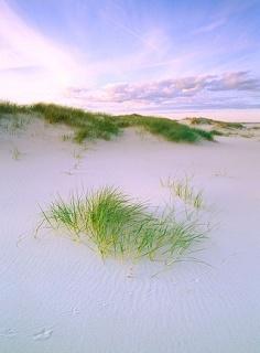Sandhammaren, Skåne, Sweden...Alla mina barndoms sommar bringades här..ljuvligt och helt underbart...