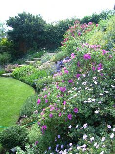 planting for a steep garden bank - Google Search