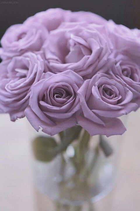 Lavender roses - my most romantic boyfriend once told me these are the most fragrant. #lavender