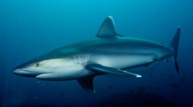 shark water assignment