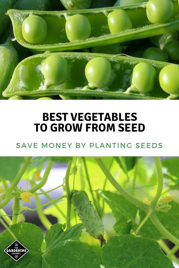 Save Money By Planting Seeds Here Are Vegetables That Grow Well