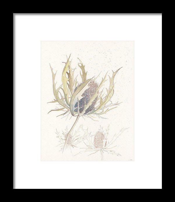 Sea Holly original ink and watercolour study painting illustration reproduction print by Lisa Le Quelenec part of the seedheads collection.