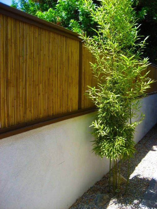 Nice bamboo screening above the rendered wall. Warms up the cold looking wall.