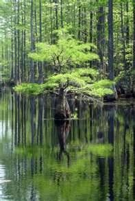 Garden Pond Design Landscaping