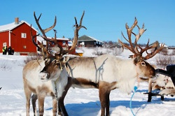 sami people | Tumblr
