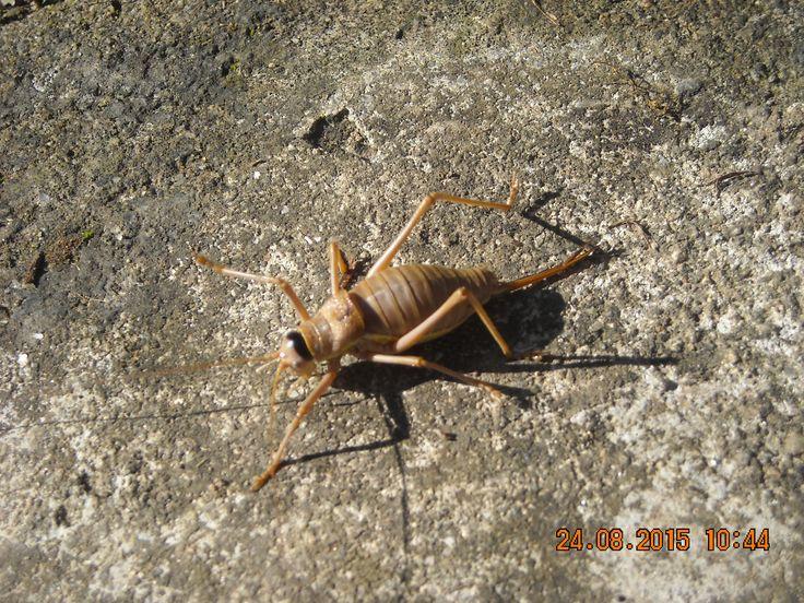 a grasshopper in my garden
