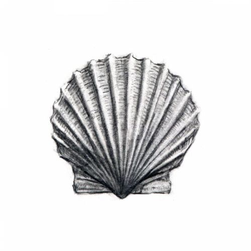 Scallop Shell Print, Myles Cavanaugh | Art: My Painting ...