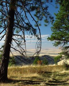81 best O Pioneer images on Pinterest Oregon trail American