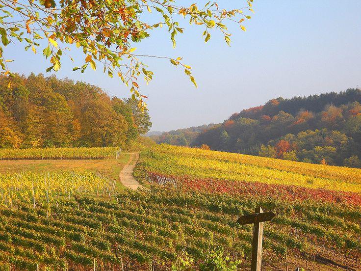 Photo: October vineyards around Palzem-WEHR