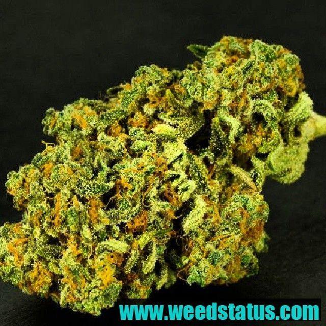 Brainstorm Haze | Cannabis | Pinterest