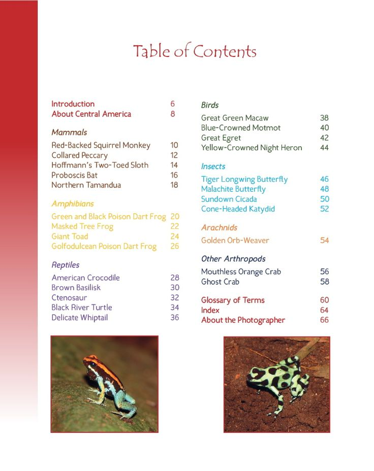 Wildlife in Central America 2; 25 MORE Amazing Animals Living in Tropical Rainforest and River Habitats. Part of Wildlife Around the World Series.   Photographs and Text by Cyril Brass.   Sample - Table of Contents