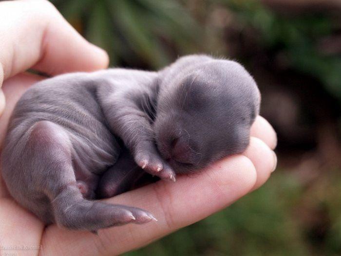20 μωρά ζώα που θα ζεστάνουν ακόμη και τη πιο κρύα καρδιά (Εικόνες)