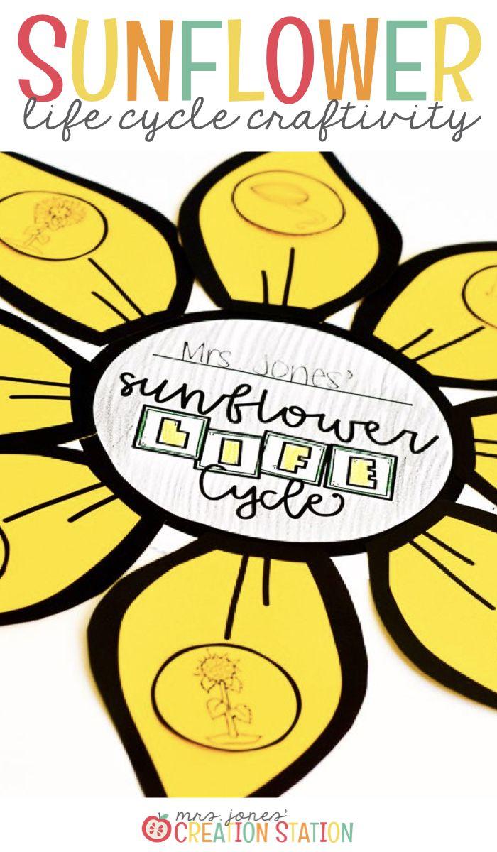 Sunflower Life Cycle   Sunflower life cycle, Life cycles ...