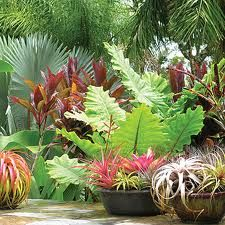 7 Best Images About Tropical Shade Plants On Pinterest Gardens Container Gardening And Tropical