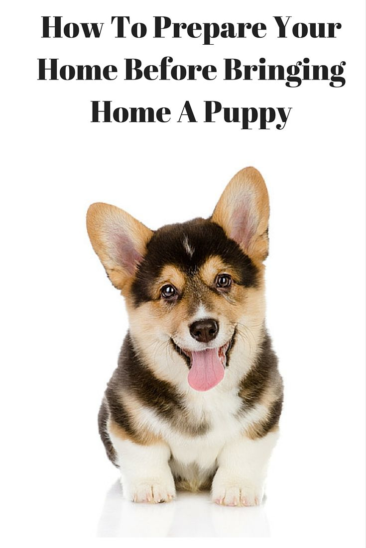 How To Prepare Your Home For A New Puppy