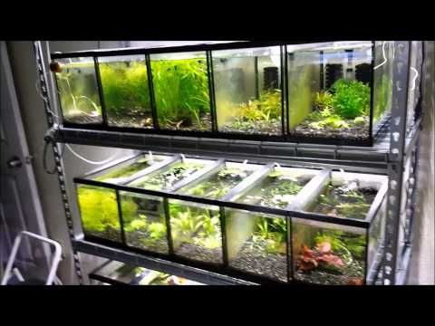 how to make freshwater from saltwater survival