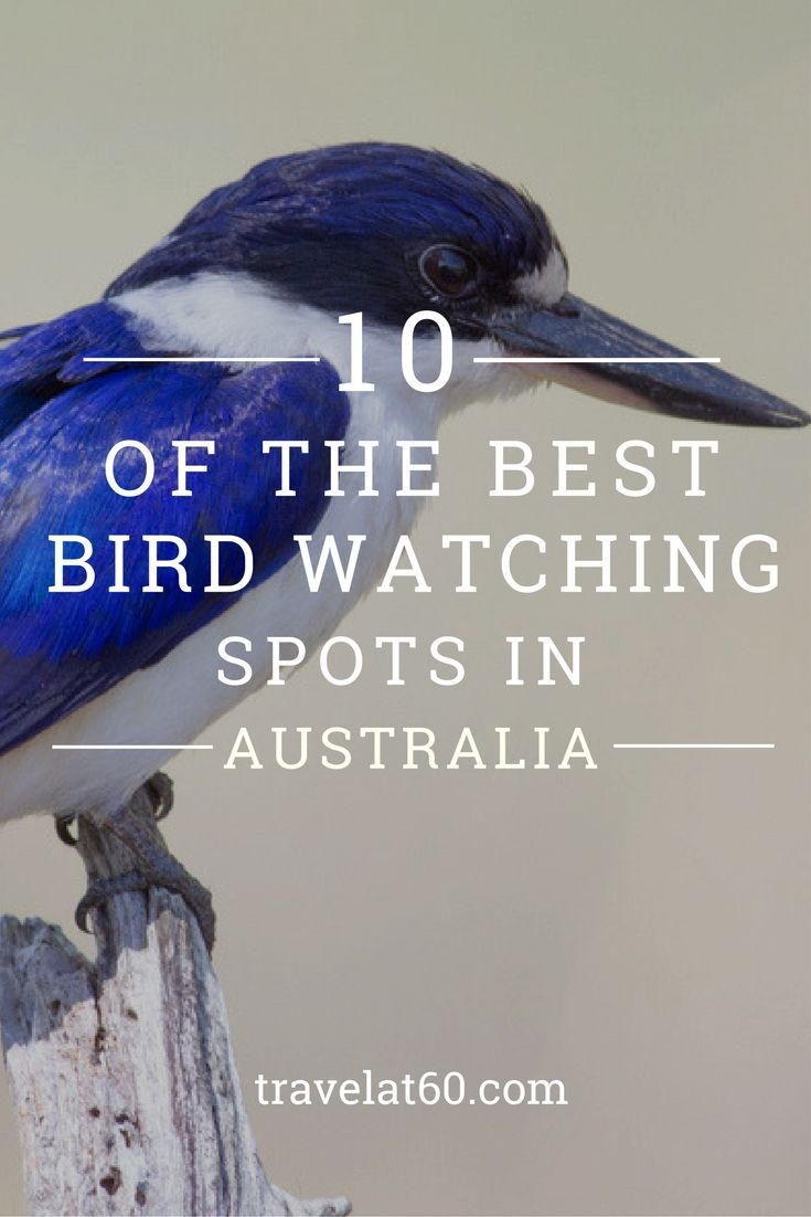 Keep an eye out for native birds at these great spots around the country.