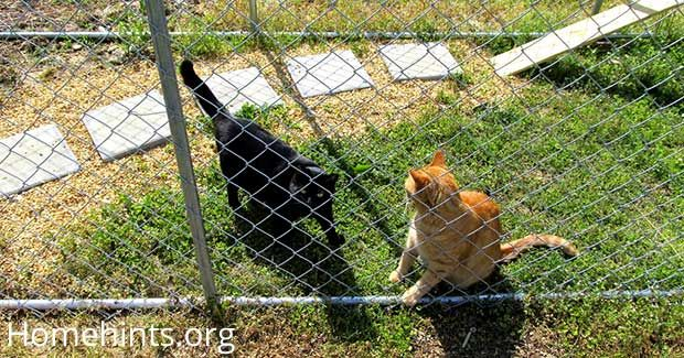 See how I use a chain-link fence kennel to make an outdoor cat enclosure. A pet door leads from the house to a cat run that is attached to the pen.