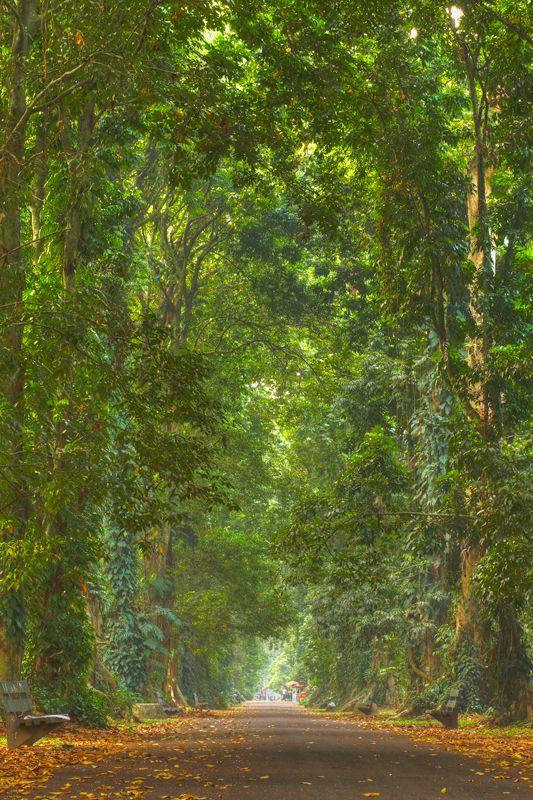 Bogor Botanical Garden | Bogor, West Java - Indonesia By: Hayden Pascal