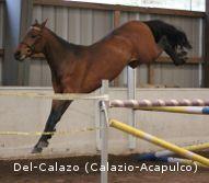 Del-Horses - Finnish Warmblood Horses
