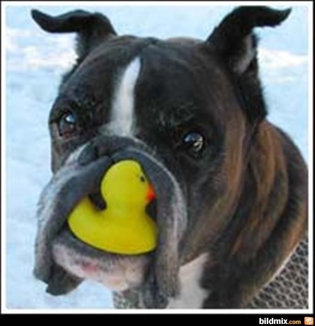 Bildergebnis für lustige hundewelpen pics