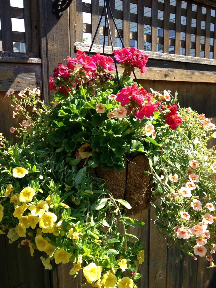 "By Robert, age 7. ""This is one of the flower baskets hanging in our yard that we bought mommy for Mother's Day."""