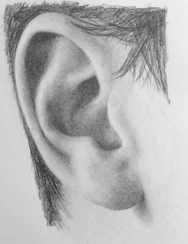 Line Drawing No Shading : How to draw a realistic ear step by drawing