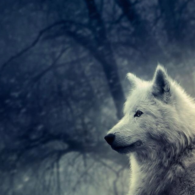 63 best images about Wolves on Pinterest | Wolves, Mink ...