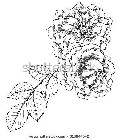 Drawn And Sketch Design Fairy Rose Or Pygmy Tropical Flower