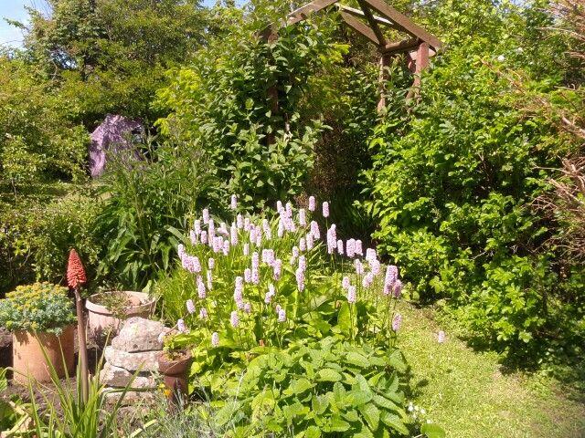 Shetland garden