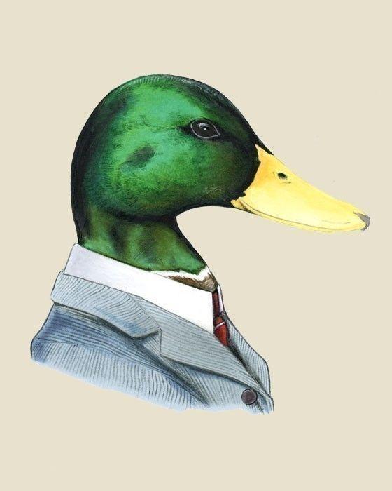 25 best ideas about Duck art on Pinterest  Baby mallard duck